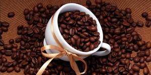 Зерна кофе для кофейного деревца