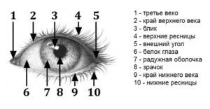 Как рисовать глаза человека карандашом поэтапно?