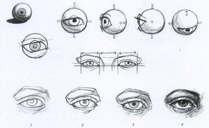 Строение глаз - основа правильного рисования