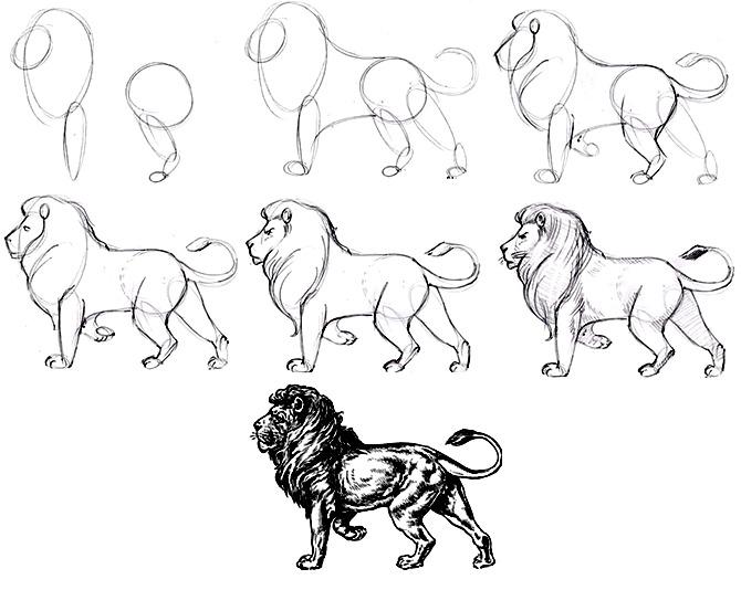 Рисование карандашом льва пошагово